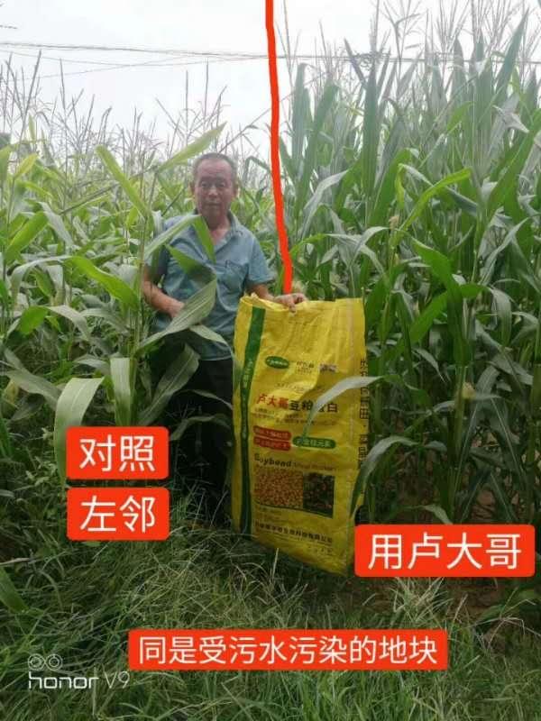 使用卢肥玉米地实拍效果