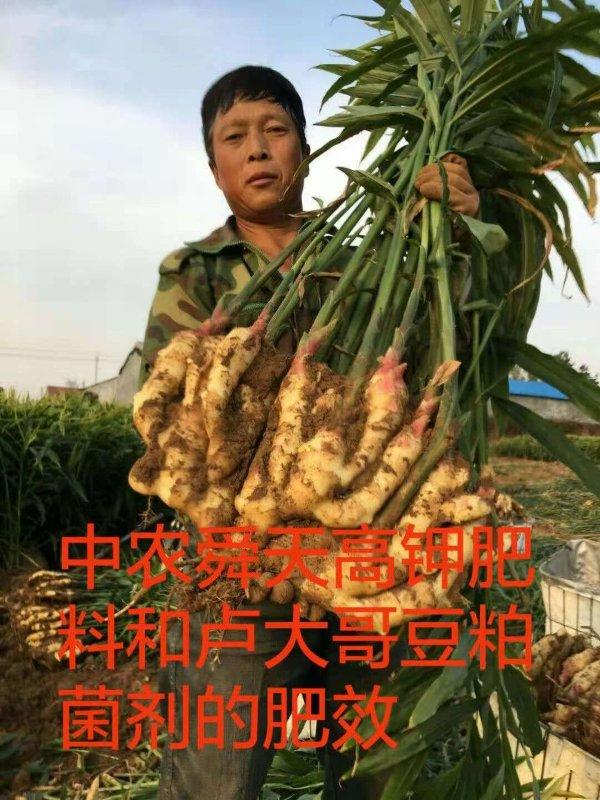 大姜种植户的肥效
